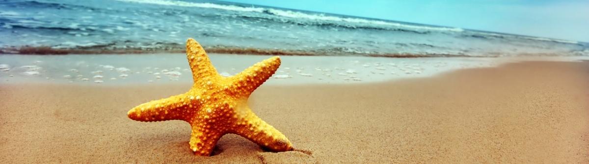 starfish_baner.jpg