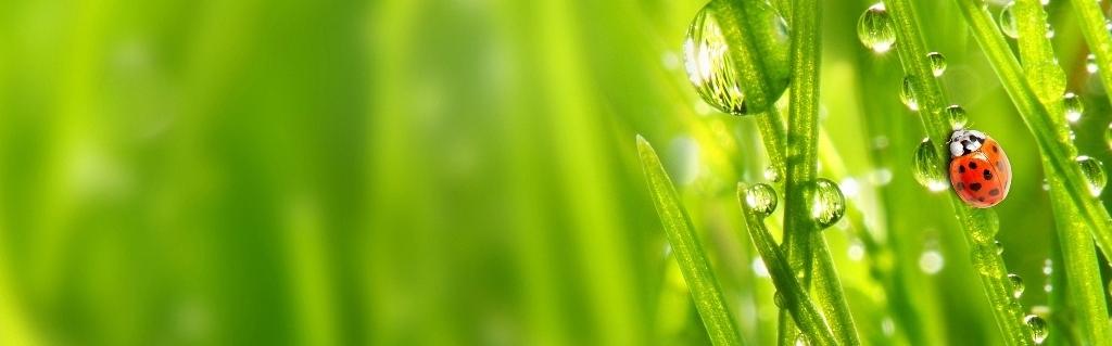 ladybug-grass-1.jpg
