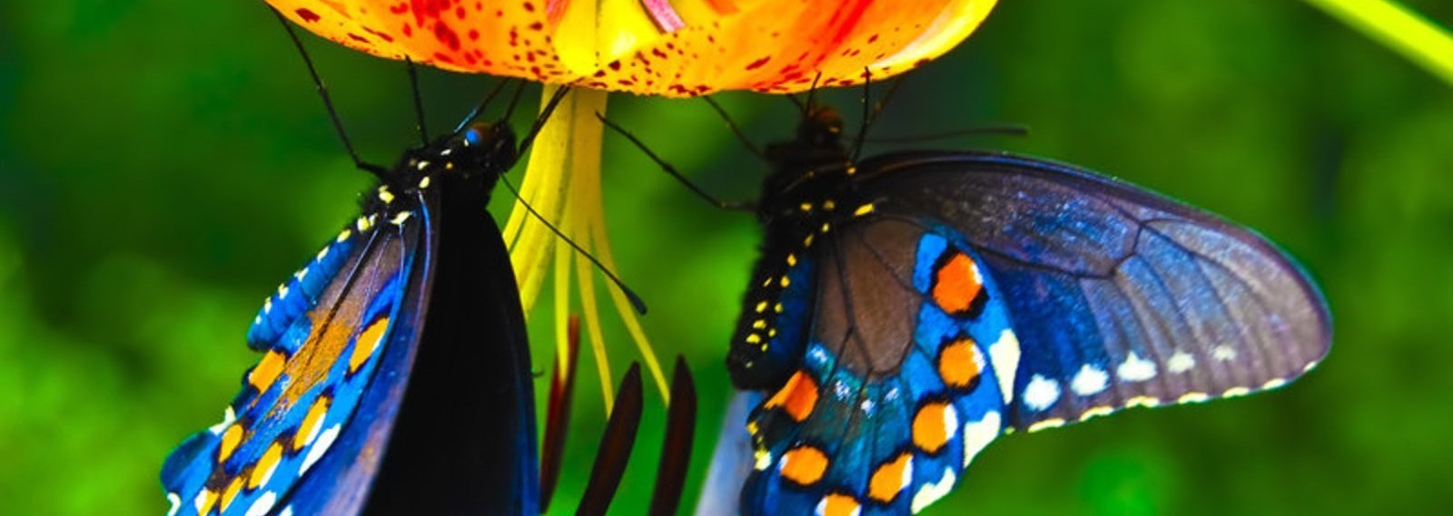 blue-butterfly (3).jpg