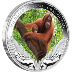 "Tuvalu 2011 - 1$ Dzika Natura w Potrzebie Orangutan ""2"" - 1 Uncja Srebrna Moneta"