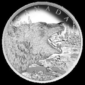 Kanada 2016 - 125$ Ryczący Niedźwiedź Grizli - 1/2 Kilo Srebrna Moneta
